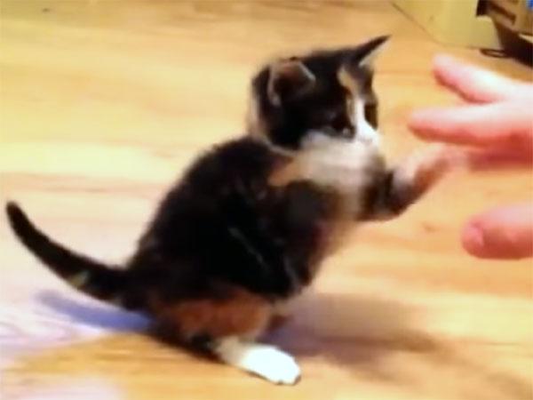 世界最弱の猫パンチにゃ!子猫の可愛い姿に癒やされます♪