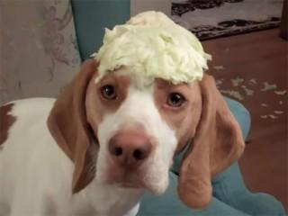 盗み食いする犬を、こっそり隠し撮り! 「食べたいワン!」