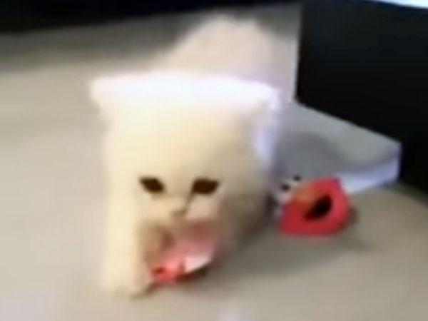 おしゃぶりを盗んで走る子猫が可愛すぎる!