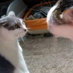 猫が喧嘩で「ワンワン」と鳴いた! 犬の鳴き真似をする猫