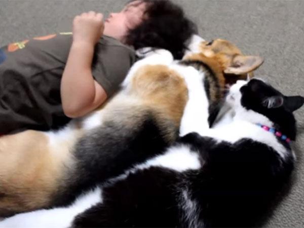 犬、猫、子どもが「川の字」になって、仲良くおねんね♪