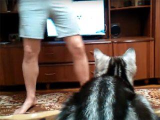 猫が真剣にテレビを見ている! 人間が前に立って、邪魔すると…