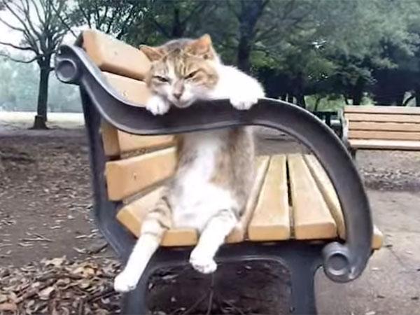 猫が公園のベンチに座って、のんびりリラックス♪