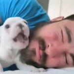 髭男とフレンチブルドッグの子犬のおもしろ動画