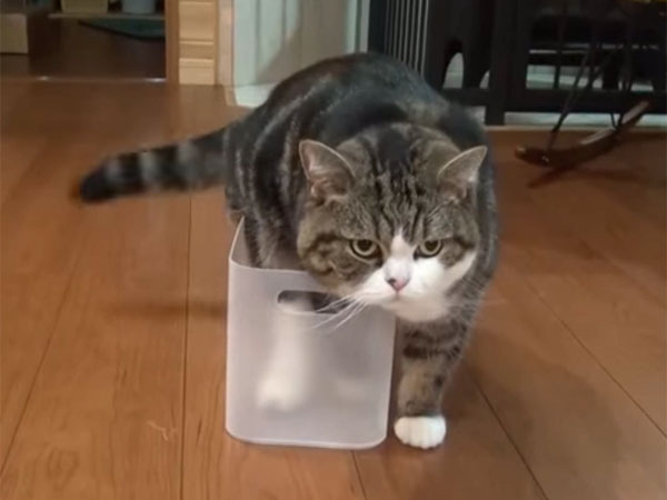 プラスチック・ケースに入ろうとするMaru