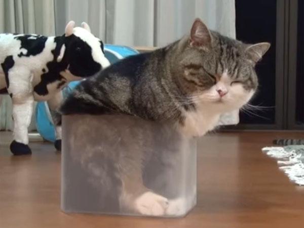 小さなプラスチック・ケースに入ったMaru
