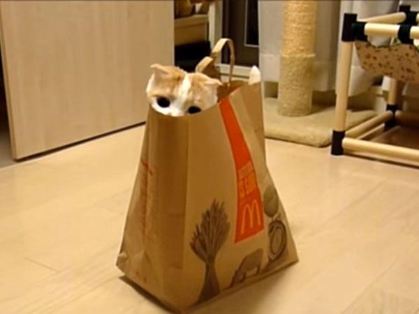 袋に入っている猫のポッケくん