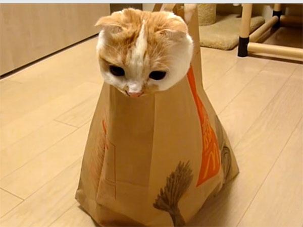 袋の中から顔を出すポッケくん