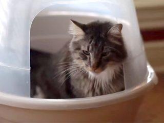 子猫に猫砂トイレの使い方をしつける♪