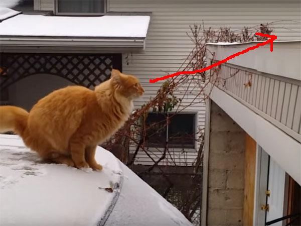 車の上から、屋根にジャンプしようとする猫