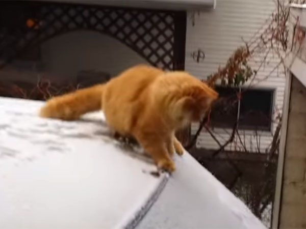 雪に滑って、ずっこける猫