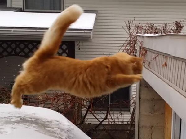 猫のジャンプ大失敗! 雪に滑る猫のおもしろ動画
