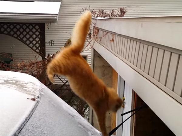 ジャンプに失敗する猫