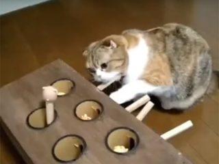 猫のもぐら叩きの進化形! 猫が出して、犬がくわえる!