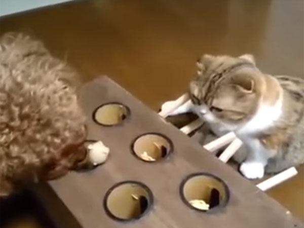 もぐらのオモチャを犬に取られてしまう猫