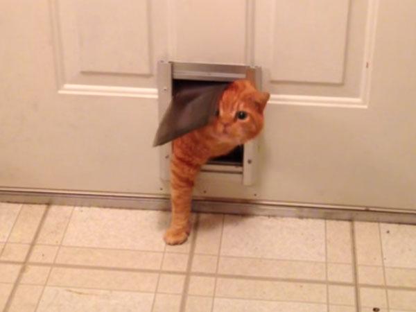 猫ドアから顔を出す猫