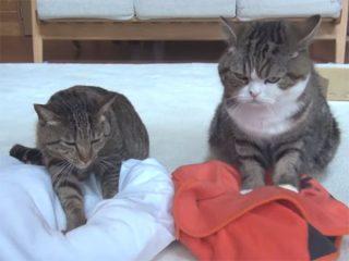 猫の前足ふみふみ♪ まる&はなが仲良く足踏みしています