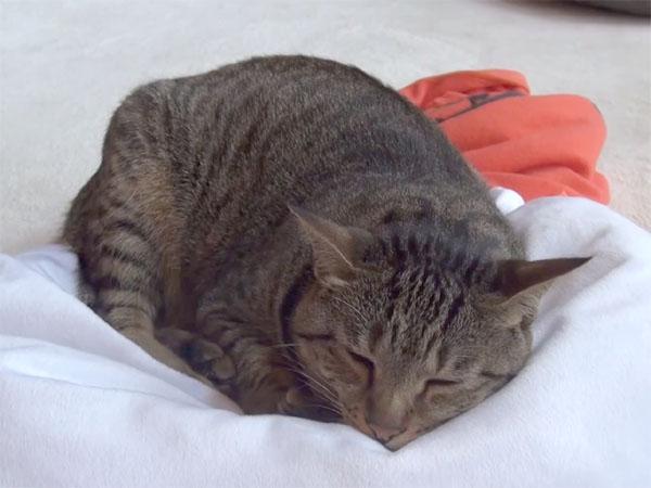 はなちゃん(Hana)の寝姿