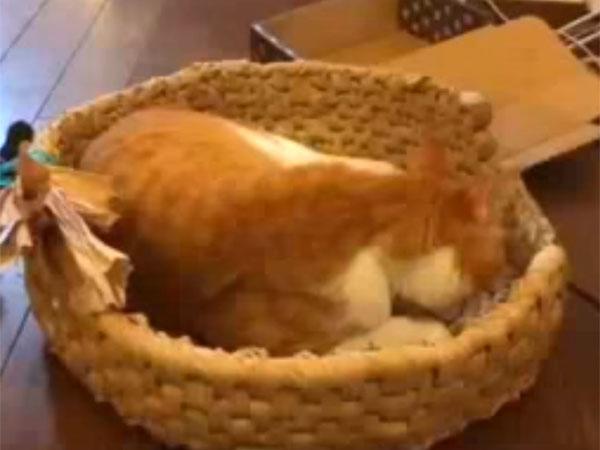作成中の猫ちぐらに居座る猫が可愛すぎ!