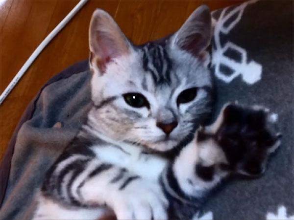 喉をごろごろ鳴らして甘える子猫
