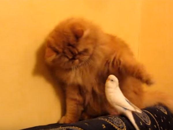 オウムに猫パンチをする猫