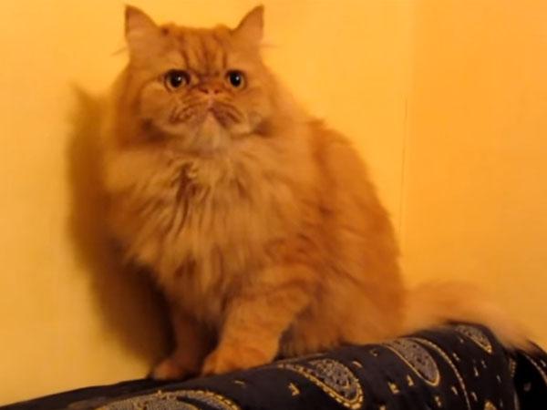 オウムを追い払った猫