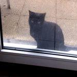 「家に入れてニャー!」 必死に訴える黒猫のジャンプが可愛すぎる♪