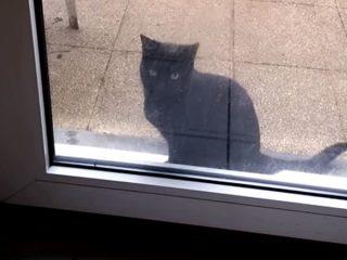 「家に入れてニャー!」 必死に訴える黒猫のジャンプ姿が可愛い過ぎる♪