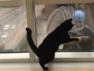 ビルの窓拭きのおじさんと友達になった黒猫♪ 「バイバイ、また一緒に遊んでニャ!」