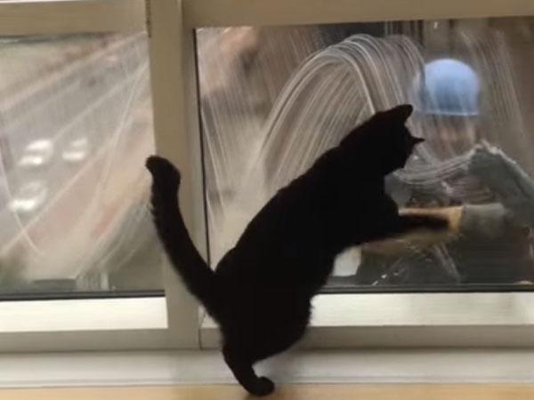 窓拭きのおじさんと友達になった黒猫♪