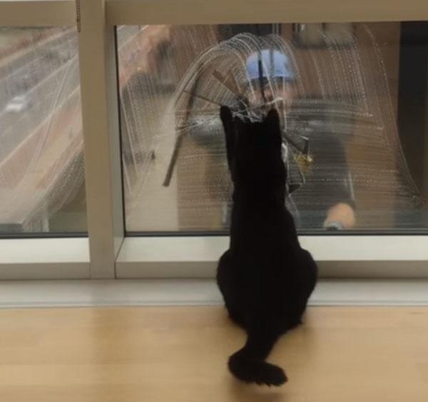 窓拭きのおじさんを見つめる黒猫