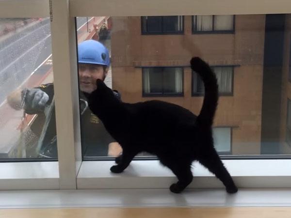 窓拭きのおじさんと黒猫