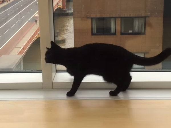 窓を見つめる黒猫