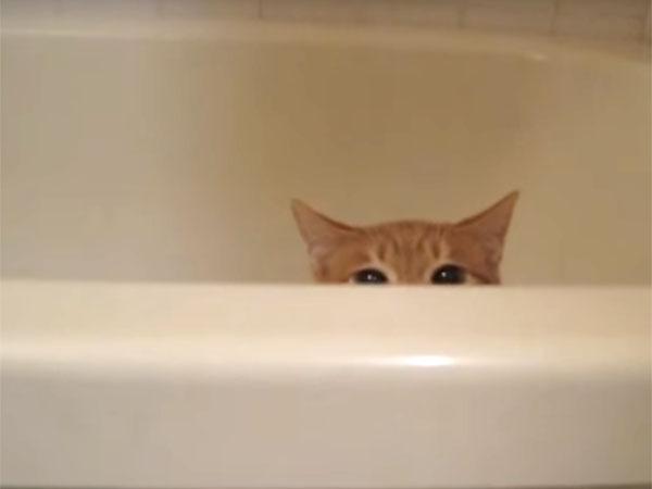 バスタブから顔を覗かせる茶猫