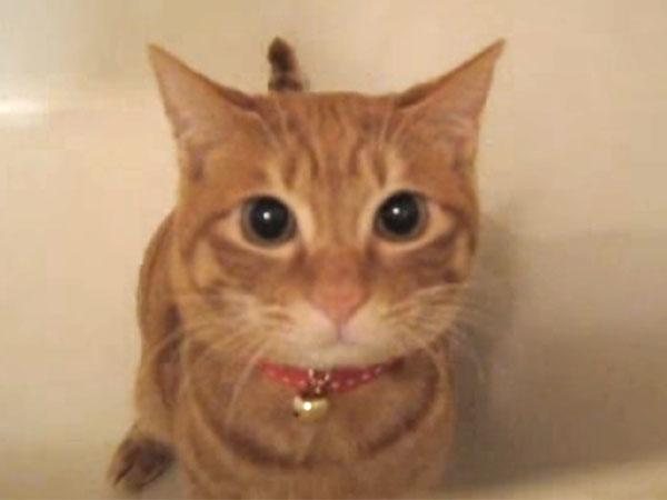 バスタブに隠れているのが見つかった茶猫