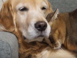 「大好きニャ♡」 犬にスリスリ甘える猫♪ 人間も嫉妬するほど、仲の良い猫と犬のカップル