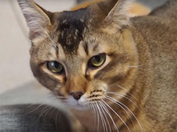 ビデオカメラを睨む猫