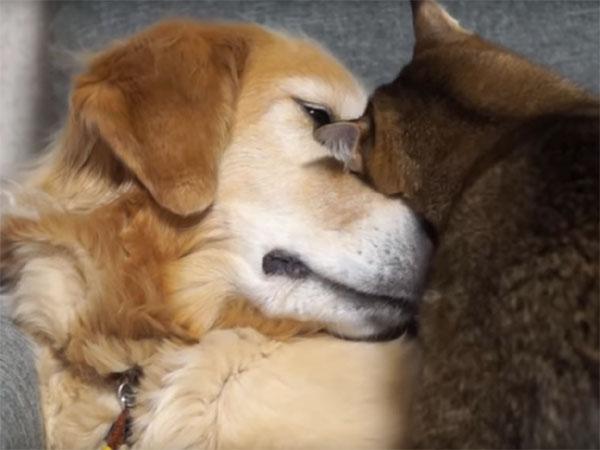 仲の良い犬と猫