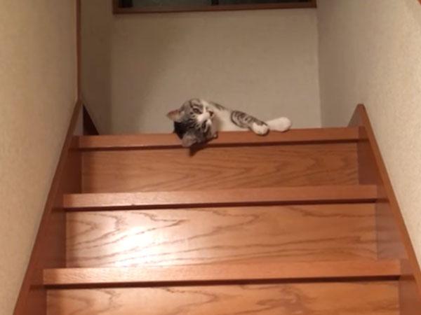 階段の上で寝転んでいる猫