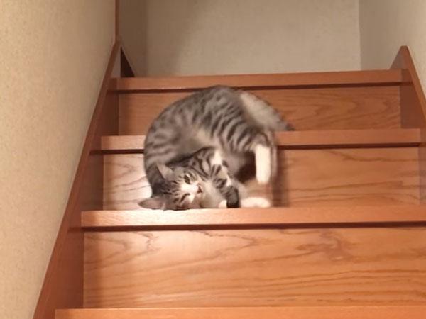 寝転がりながら階段を降りる猫