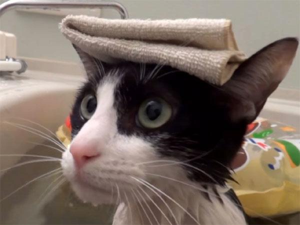 湯船に浸かる猫