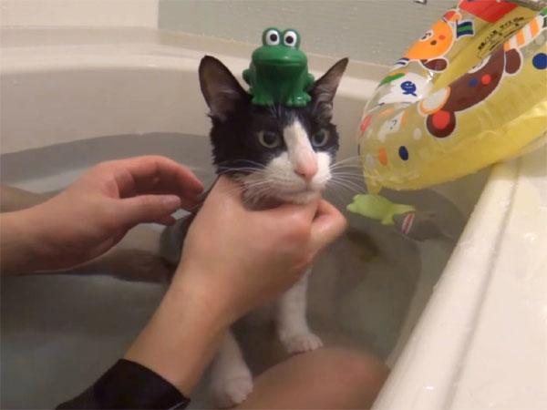 頭の上にカエルの人形の乗せられている猫