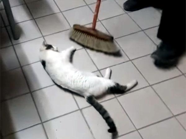 モップの前に寝転ぶ猫