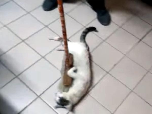 モップで履かれる猫