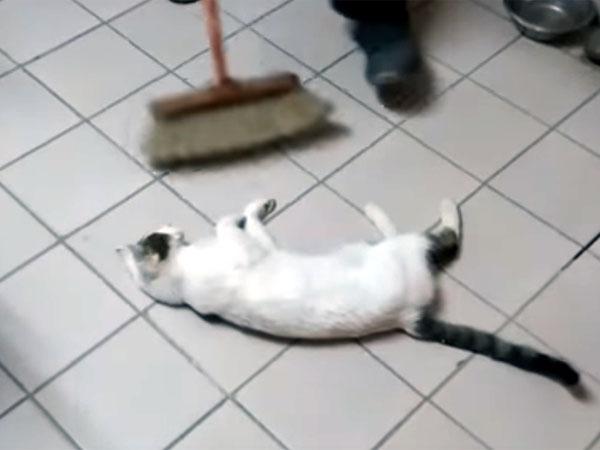 モップの前で掃除を邪魔する猫