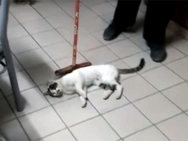モップで履かれるのを待っている猫