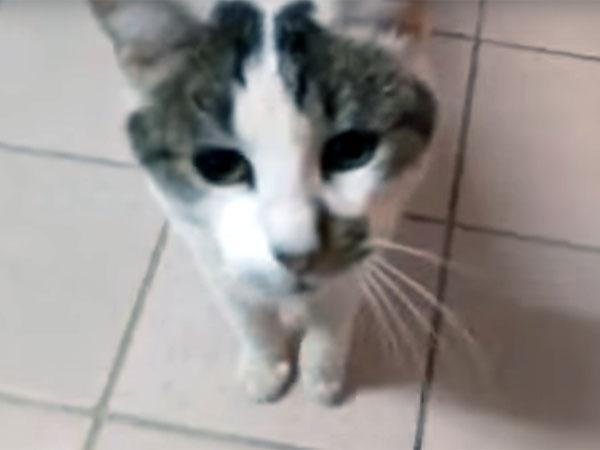 モップで履かれた猫の顔
