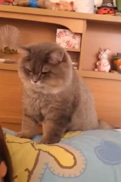 飼い主を起こしに来た猫