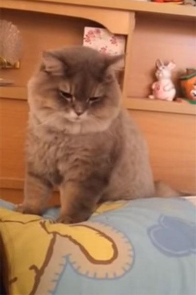 飼い主の枕元で座っている猫