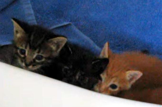 バスタブの中の子猫の兄弟